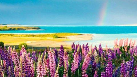 在新西兰,过一个彩虹糖般的春天